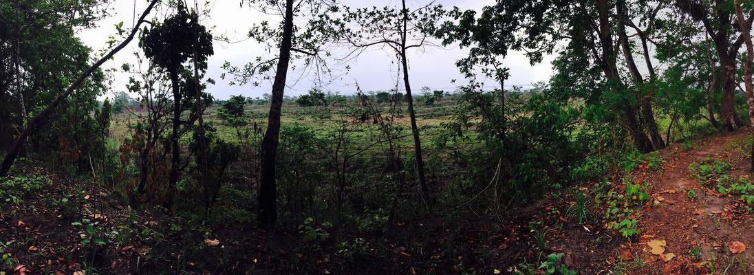 Panorama von Wald und Sumpf