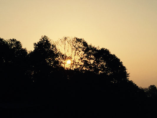 Um fünf Uhr in der Frühe ist die Sonne langsam in den Bäumen zu sehen.