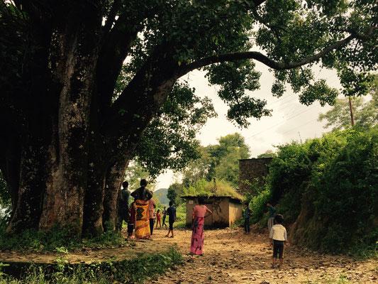 Der Dorfplatz befindet sich unter einem riesigen Baum, den Raj Kumars Ururgroßvater vor 140 Jahren gepflanzt hat.
