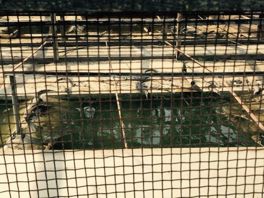In der Zuchtstation gibt es etliche Becken mit verschiedenen Altersgruppen. Die meisten sind etwa vier bis sechs Jahre alt.