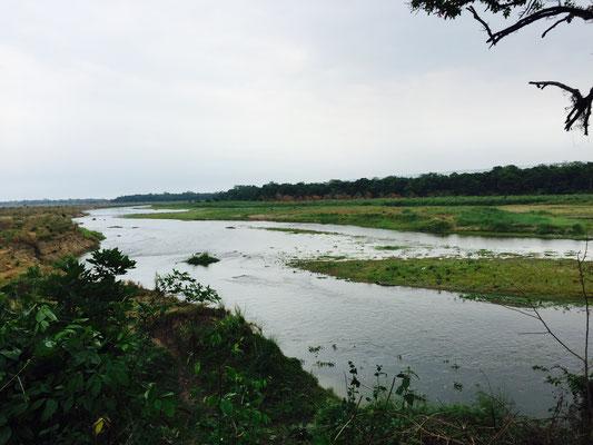Es gibt kaum eine Flussstelle, wo man keine Krokodile entdeckt, wenn meist auch eher versteckt. Der Guide hingegen sieht jedes Tier sofort – auch jeden Vogel erkennt er unverzüglich.