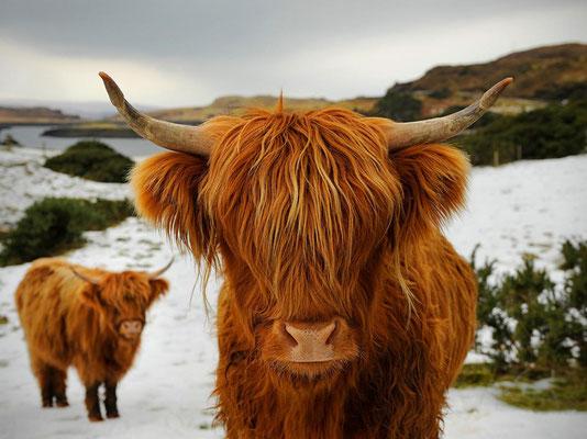 La highland - Écosse