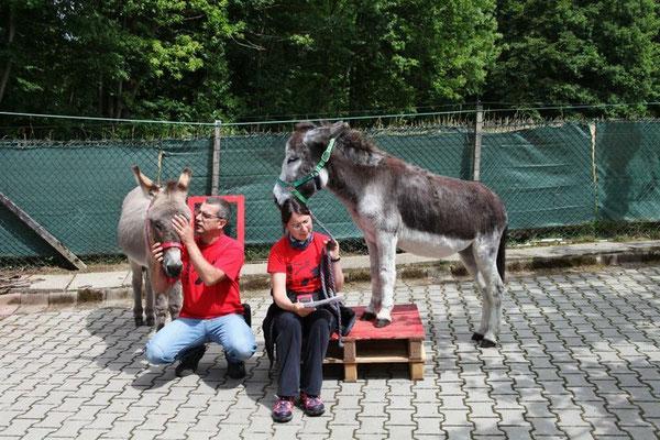 Die Esel Karim und Baldur