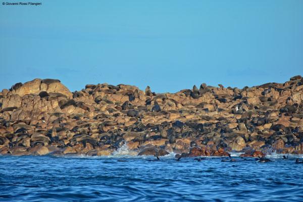 SUDAFRICA Shark alley