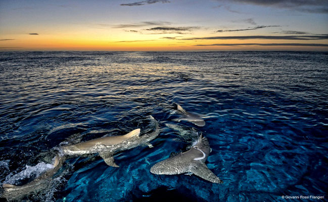 LEMON SHARK AL TRAMONTO