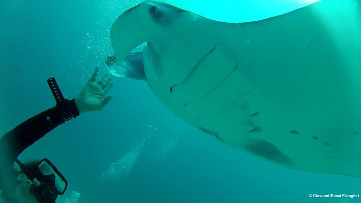 OCEANO INDIANO  Anna e la manta