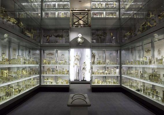 HUNTERIAN MUSEUM nella teca l'enorme scheeltro di Charles Byrne