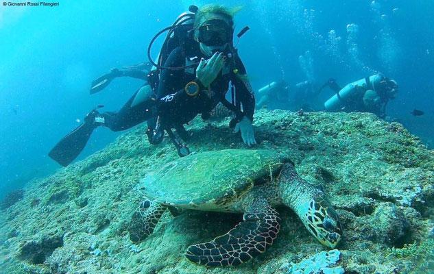 Anna e la tartaruga