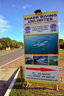 SHARK DIVING UNLIMITED