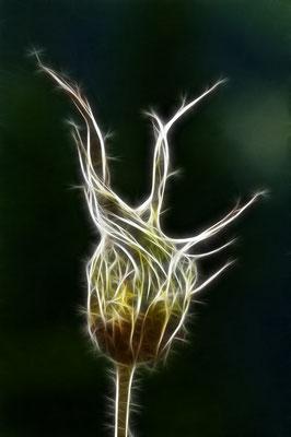 Zwirbelgras in Fractalius