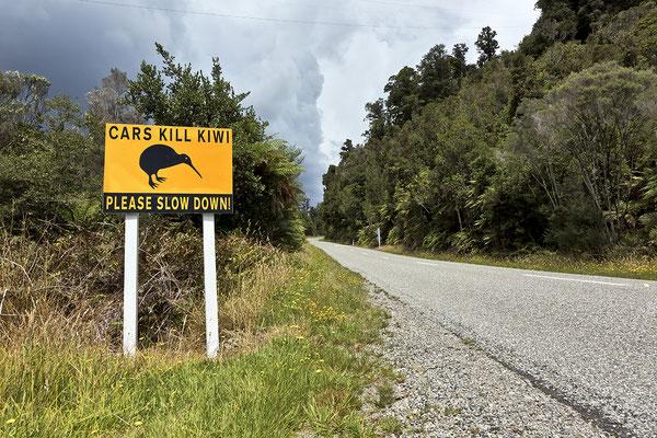Kiwi in Gefahr