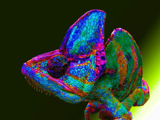 Pop Art Chameleon