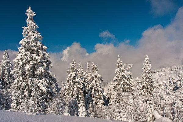 Schnee one Ende