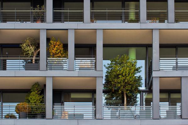 Balkonpflanzen....