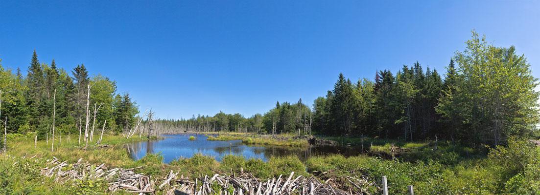 Natur pur - Nova Scotia - Kanada