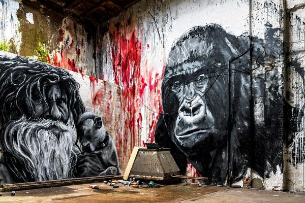 Mr. & Kong