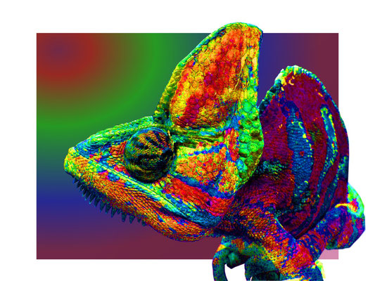 Pop Art Chameleon