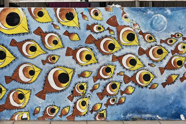 Fischlies