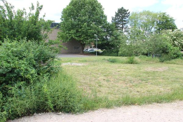 Der ehemalige Schulgarten, die einzige zugängliche Grünfläche auf dem Schulgelände, hat enorm unter den Bauarbeiten der letzten Jahre gelitten. Nur noch Fragmente der ehemaligen Bepflanzung sind zu erkennen - von Schatten kann auch an dieser Stelle keine