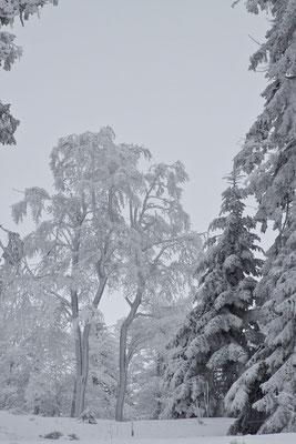 Bayerischer Wald, 02.01.2011