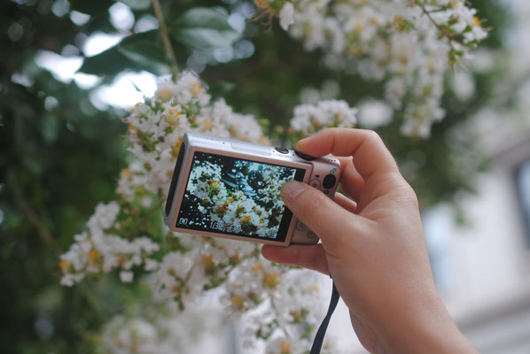 Peter takes photo of Hannah taking photo of crepe myrtle blossoms