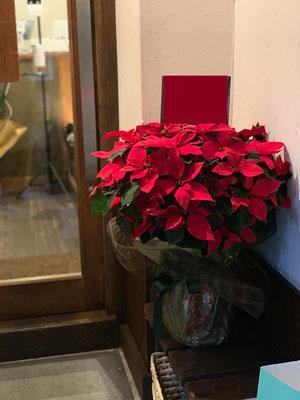 12月の花鉢といえばポインセチア