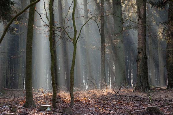 Wildpark Dülmen (Kreis Coesfeld)