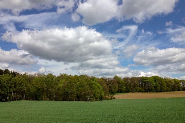 Naturpark Hohe Mark bei Haltern