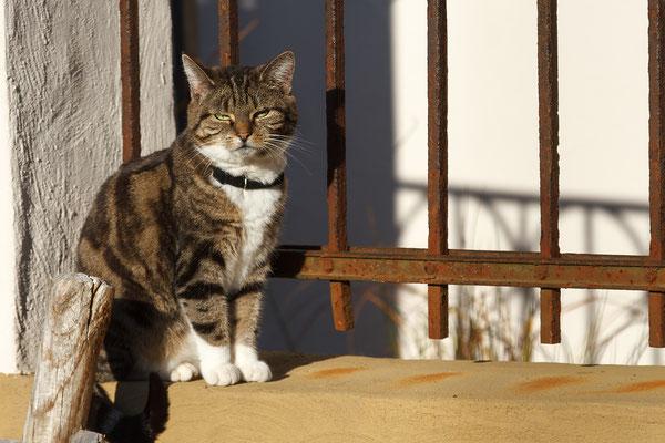 Katze in der Mittagssonne