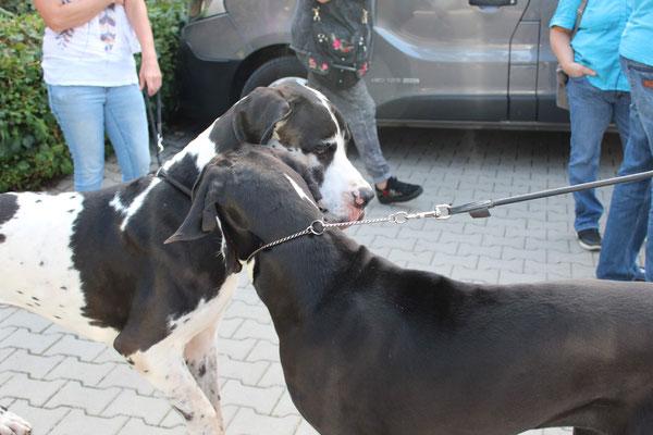 Asco und Arina