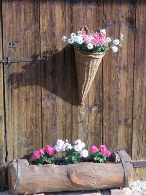 les fleurs de savoie
