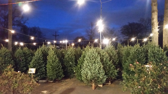 Night time at the Fire Dept/Lions Club Christmas Tree Sale