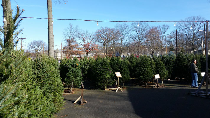 Fire Dept/Lions Club Christmas Tree Sale - First Day of Sales