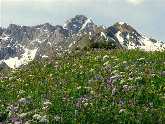 Bergblumen Wiese