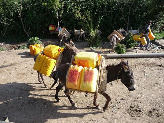 Wichtigste Transportmittel bei der Wasserbeschaffung sind Esel