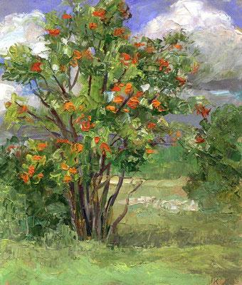 20. Рябина, к.м. 23х20, 2005