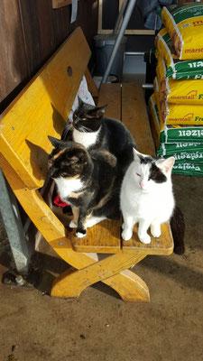 Unsere Katzen - Alles im Blick