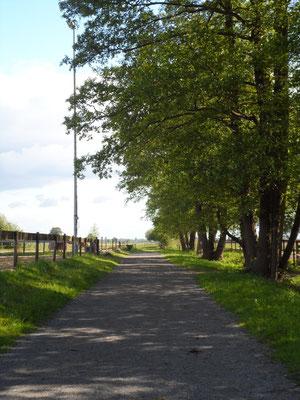 Weg zu den Wiesen und Paddocks