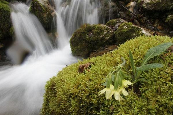 Cascade en vallée de Campan