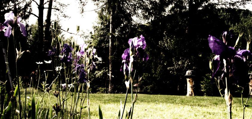 englischer Garten + english garden + giardino inglese