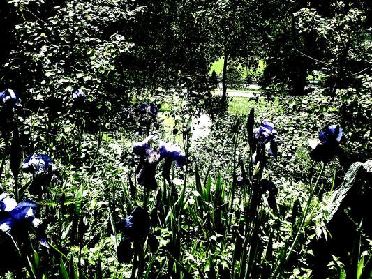 magic garden flowers + Zaubergarten Blumen + fiori nel giardino dei miracoli
