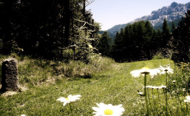 Dolomiti Braies flower power