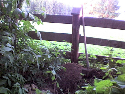 Eichhörnchen Grab + tomb + fosso
