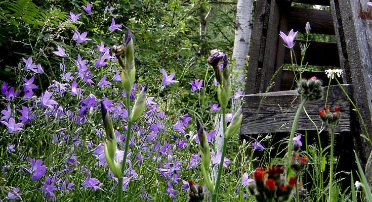 ewige pachamama Blumenkraft in den Dolomiten + forza dei fiori Dolomiti + flower power of the Dolomites