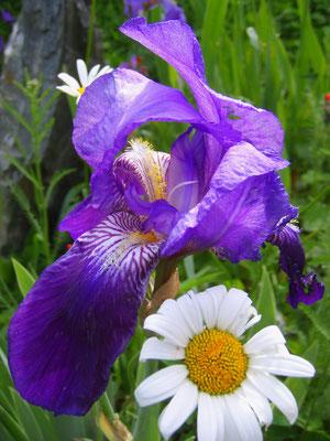 pachamama Blumenkraft + forza di fiori + flowerpower