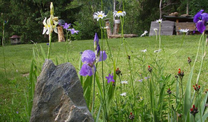Blumen Meditation Garten + fiori giardino meditazione + meditation garden flower power