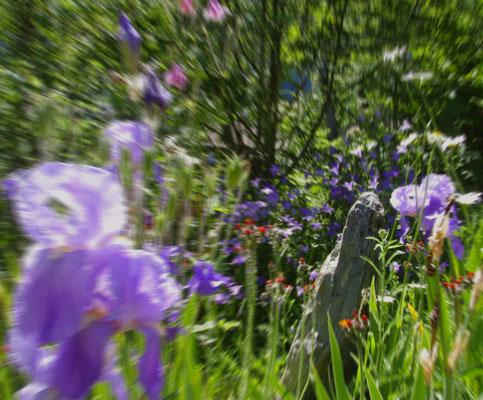 Alpine Flowerpower Alpen