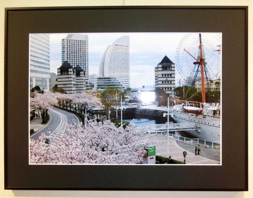 桜・さくら(写真)内山幸子