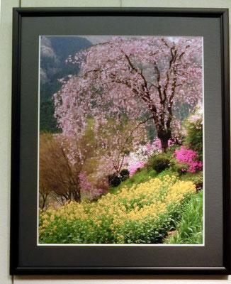 里山の春(写真)村澤昭夫