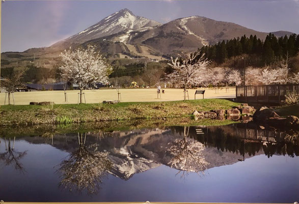 城山の桜Ⅱ(写真)坂直孝